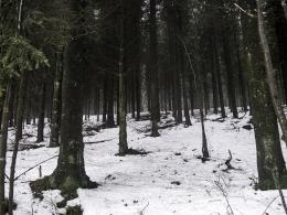 Snowintheforest
