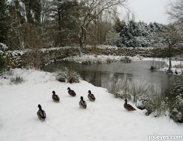 Its quacking cold