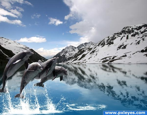 dolphin fjord