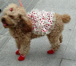 Doggie socks
