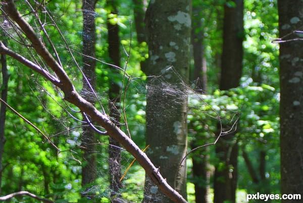Weaving the Woods