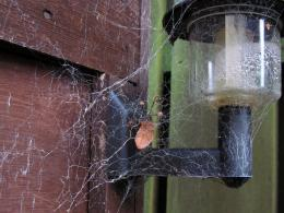 Consumed by the Web