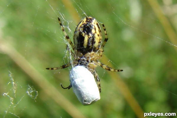 spider and egg bag