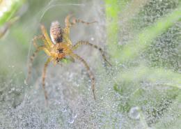 wetweb