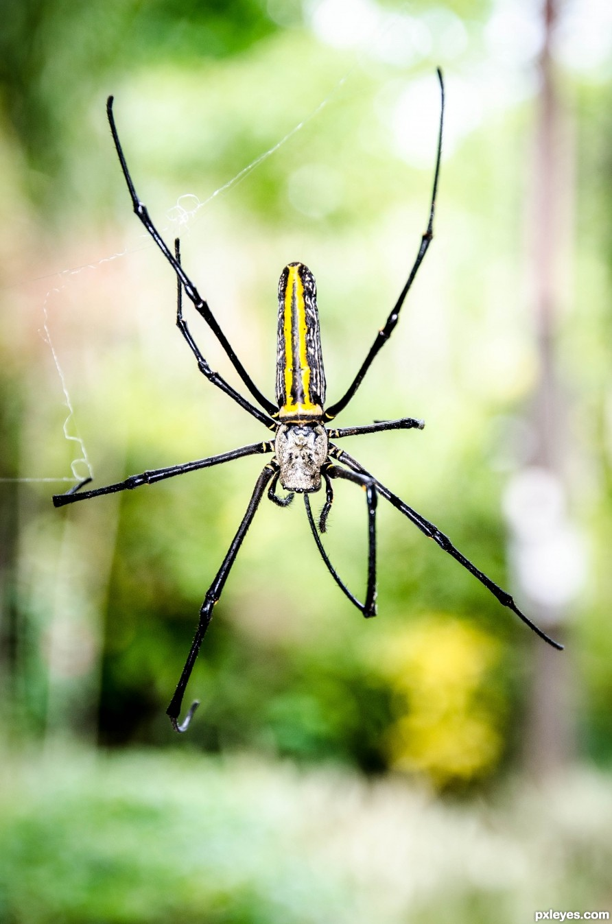 Spider descending...