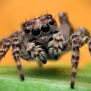 spiders 4 photography contest