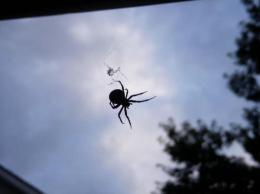 Mr. Spider
