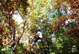 Climbingthetrees