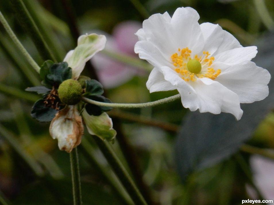 A Garden Spring