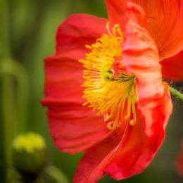 Myfavouritespringflower