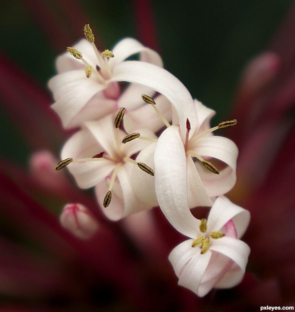 Blooms Blooming