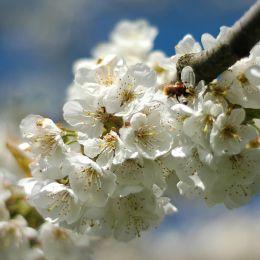 Blossomandbee