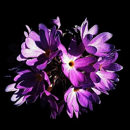 Purple Sphere of flowers.