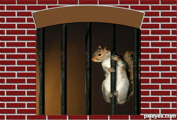 Jail House Squirrel