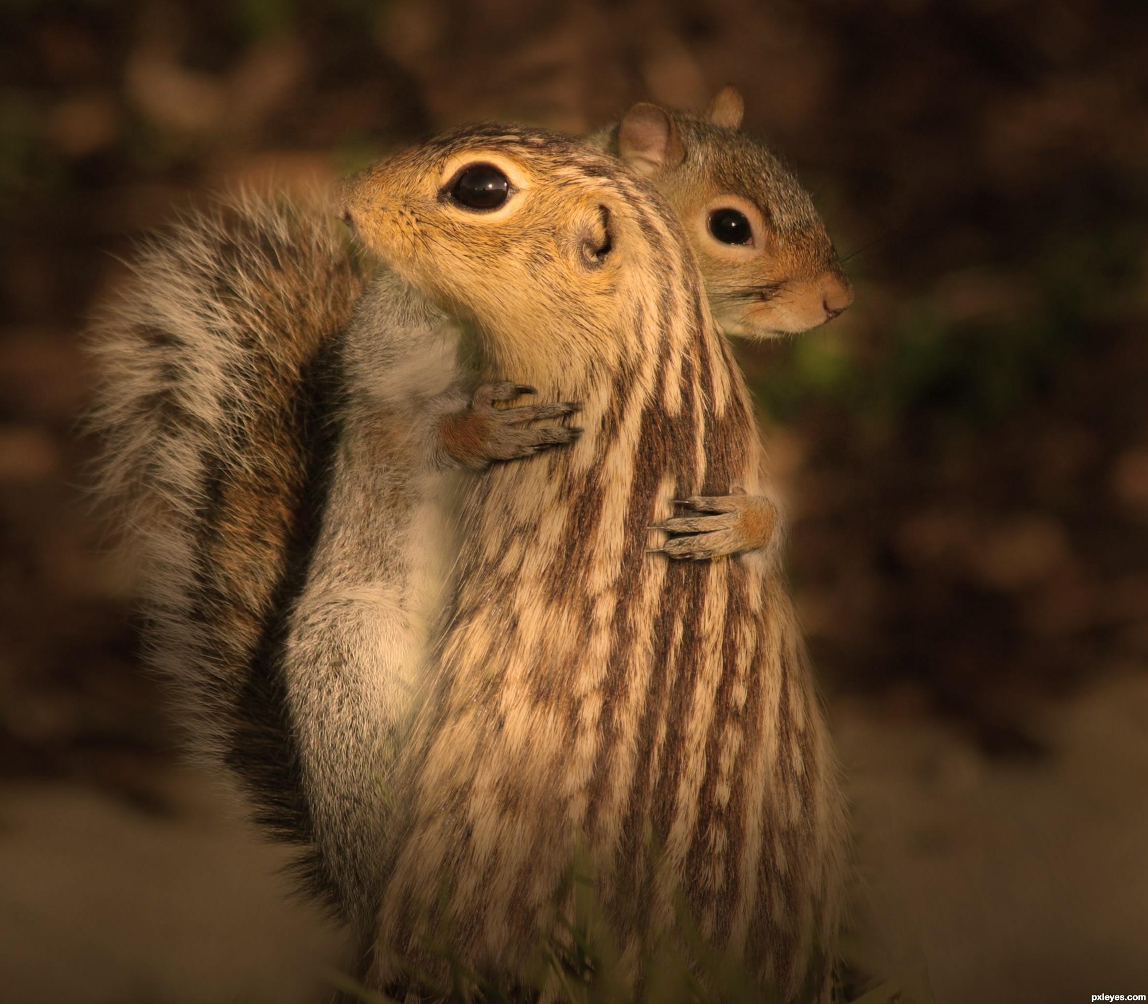 Cute squirrels in love - photo#15