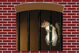 JailHouseSquirrel