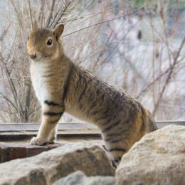 Catsquirrel
