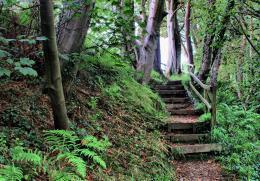 Foreststeps