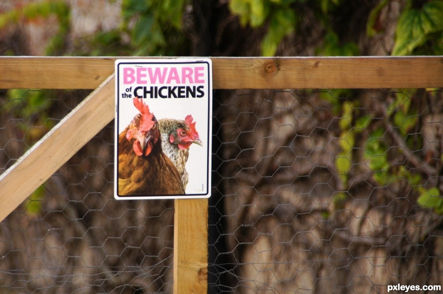 Beware of the Chikens