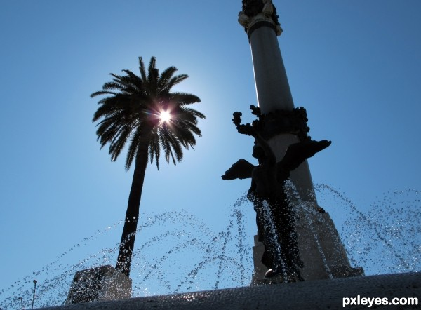 Palm and fountain