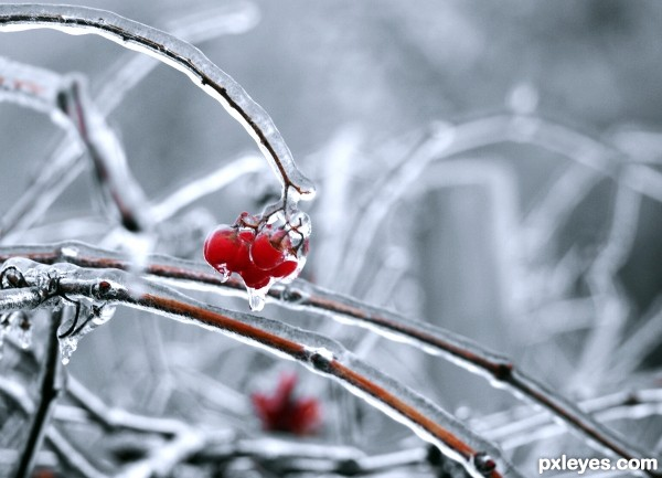 Fresh Frozen