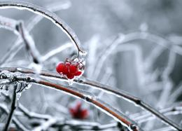 Fresh Frozen Picture
