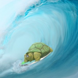 One Cool Turtle Picture