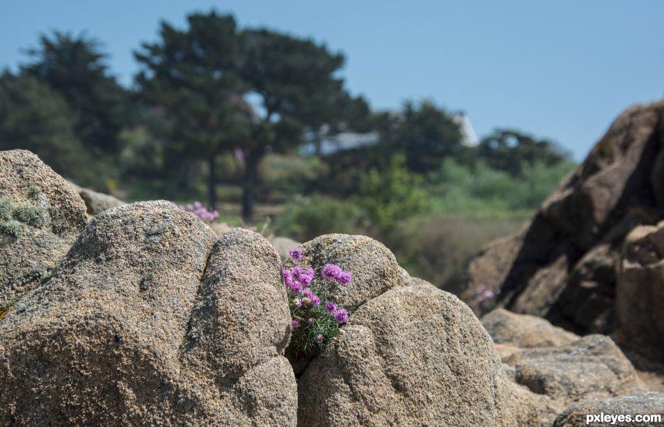 Natural rockery