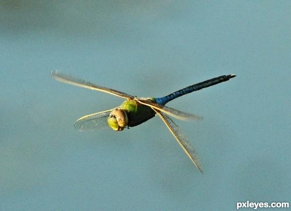 Delta Dragonfly
