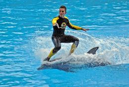 Dolphinsurfin