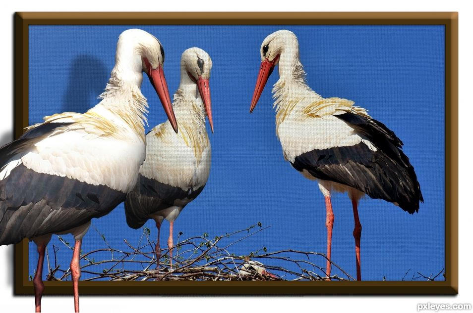Three Dee storks