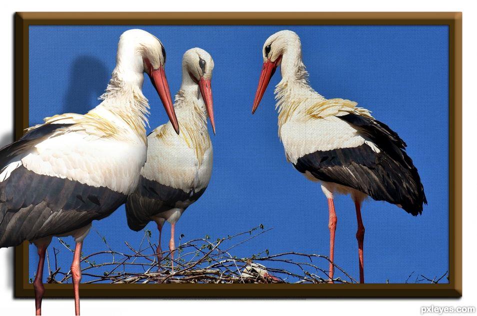 Three Dee storks