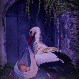 baby and stork Picture