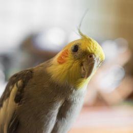 Birdsmile