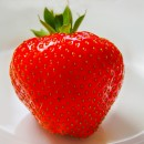 strawberry photoshop contest