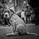street life BW photography contest