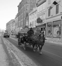 Horse carriage in a cold street
