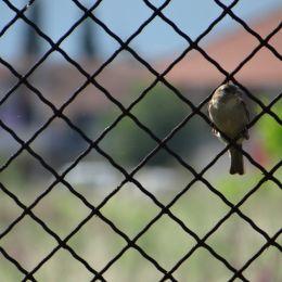 Ambitiousbird
