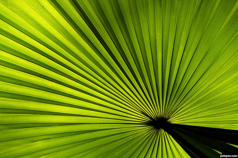 Palm Leaf Palm leaf - created by
