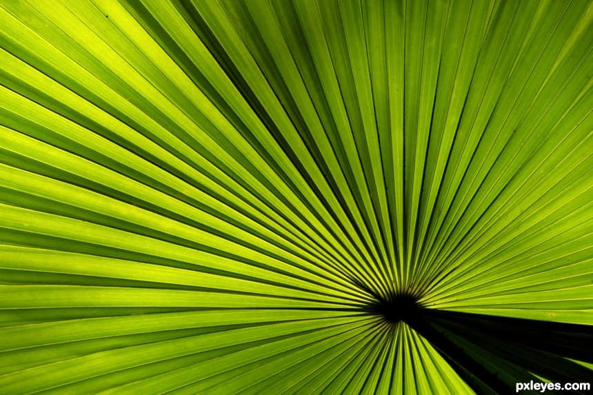 Palm leaf photoshop picture)