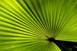 Palm leaf Picture