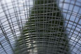 steelstripes