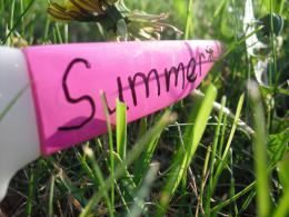 Sunglassesampgrass
