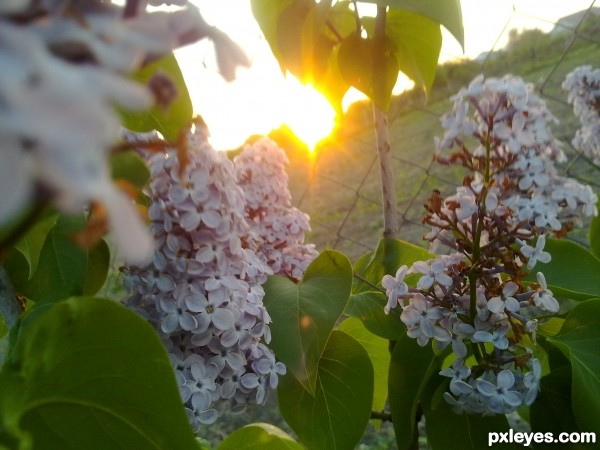 Sun and flowers