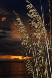 SunsetSeaoats