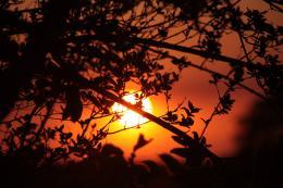 Sunsetleaves