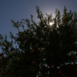 Sunoverlooksthepomegranates