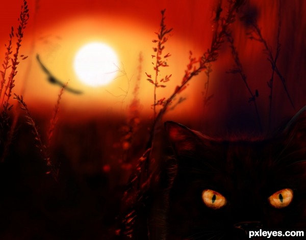 Night hunters