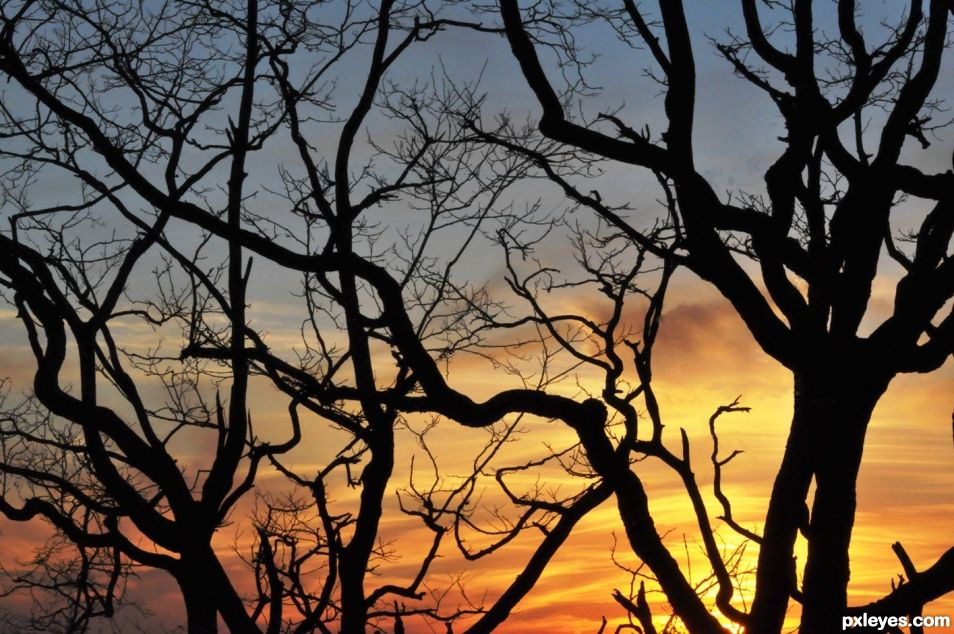 Sunset Behind the Branches