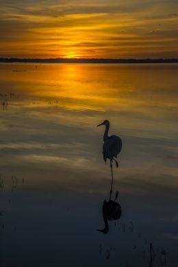On one leg at sunset